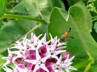 Busy Bee - Digital Photography - By Chad Vidas, Photography Photography Artist
