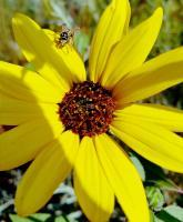 Chads Outdoors - Busy Bee - Digital