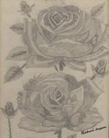 Roses - Pencil  Paper Drawings - By Rahul Insan, Black And White Drawing Artist