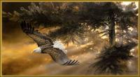 Freedom - Acrylics Paintings - By Duane Geisness, Wildlife Painting Artist