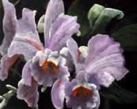 Flouwer Paintings - Orchidee - Acrylyc