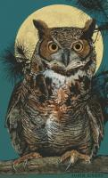 Wildlife - Great Horned Owl - Digital And Traditional