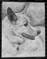 Pencil - Dog - Pencil  Bristol Board