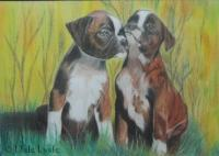 Colour Pencil - Boxer Buddies 2012 - Colour Pencil