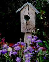 Birdhouse And Flowers - Digital Photography - By Judith B Adams, Nature Photography Artist