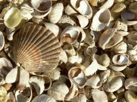 Nature Collection - Winter Shells - Digital