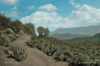 Dos Vientos Trail - Oil On Canvas Paintings - By Harry Walton, Realistic Impressionism Painting Artist