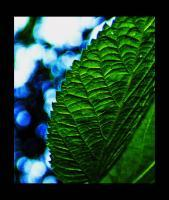 Nature - Leaf - Photo