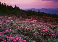 The East - Roan Mountain Sunset I - Fuji Crystal Archive