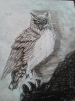 Drawing - Owl Be Seeing You - Pencil