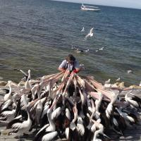 Photography - The Pelican Man - Full Gloss Print