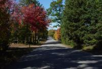 Nature - Autumn Road - Photography
