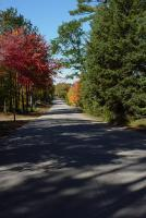 Nature - Autumn Road 2 - Photography