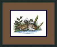 Wood Ducks Nesting - Pen  Ink W Water Colors Paintings - By Daren Tanner, Pen  Ink Painting Artist