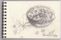 Sketches - Quick Study Sketch For - Still Life With Grapes - Graphite Pencil