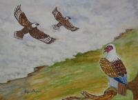 Wild Life - White Crested Falcon - Water Colour
