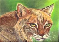 Wildlife - Bobcat - Pastel