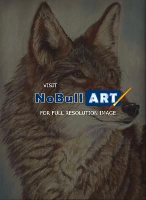 Wildlife - Coyote - Pastel
