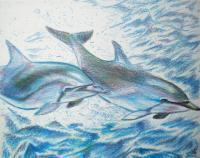 Color Pencil Drawings - Dolphin Study - Color Pencil