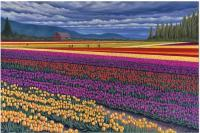 Tulip Fields - Skagit Valley Tulips - Sold - Oil