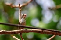 Goan Bird Crying - Digital Photography - By Buro Lsk, Naturalist Photography Artist