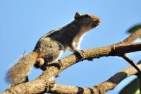 Squirrell - Digital Photography - By Buro Lsk, Naturalist Photography Artist