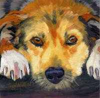 Dog Series - Dog 13 - Oil On Board
