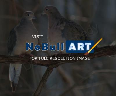 Bird Photography - Dove Love - Digital Slr