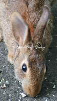 Bunny Face - 8 12 X 11 Archival Matte Photography - By Donna Kennedy, Nature Wildlife Photography Artist