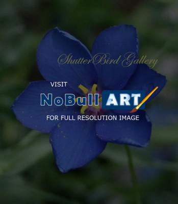 Floral Photography - Royalty - 8 12 X 11 Archival Matte