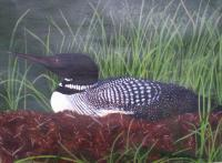 Dads Loon - Acrylic Paintings - By Dana Arvidson, Nature Painting Artist