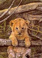 Wildlife - Lion Cub - Colored Pencil