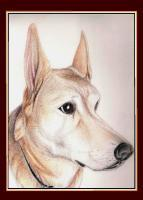 Portraits - Romeo - Colored Pencil