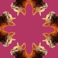 Symmetrically Balanced Cats - Digital Digital - By Karly Krempges, Digital Art Digital Artist