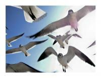 Untitled - 35Mm Photography - By Michael Pisula, Wildlife - Seagulls Photography Artist