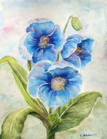 Floral - Blue Poppies - Watercolor