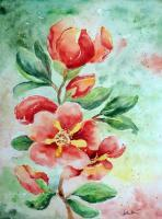 Floral - Quince - Watercolor