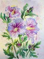 Floral - Hibiscus - Watercolor