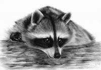 Cute Raccoon - Oil Paintings - By Danguole Serstinskaja, Hyperrealism Painting Artist