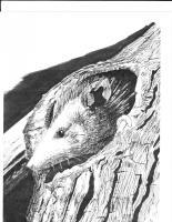 Wildlife Art - Baby Possum - Marker