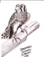 Wildlife Art - American Kestrel - Marker