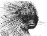 Wildlife Art - Porcupine - Marker