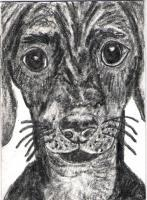 Animal Art Expressive - Cute Bugeyed Dog Original Aceo Sketch Card - Graphite Pencil