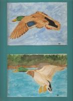 Mallard Ducks - Watercolor Paintings - By Bill Hewes, Nature Painting Artist