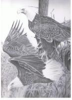 Pride - Pencil Drawings - By Michael Cameron, Free Hand Drawing Artist