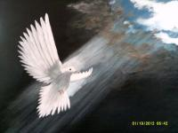 A Doves Love - Acrylic Paintings - By Sam Mcilwain, Realism Painting Artist