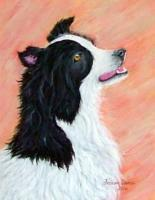 Dogs - Border Collie - Acrylic