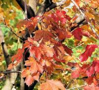 Digital Photos - Fall Leaves - Digital Photography