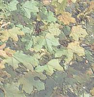 Digital Photos - Leaf Patterns - Digital Photography
