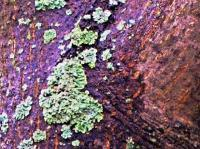 Digital Photos - Lichen - Digital Photography